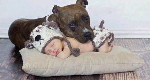 bebek ve evcil hayvan