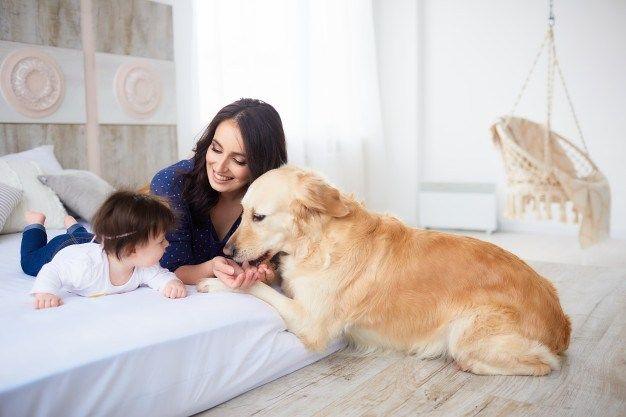 bebek olan evde hayvan beslenir mi