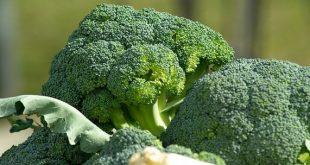 brokoli bakımı
