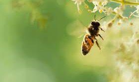 bebeklerde arı sokması