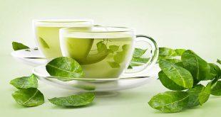 yeşil çay yağ yakımı