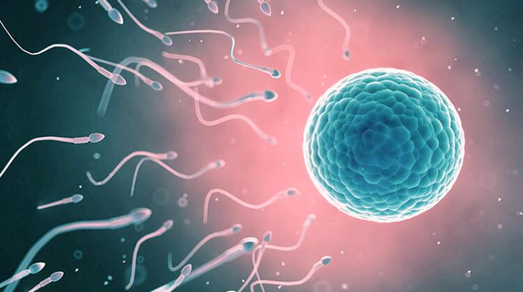 erkek bebek için yumurtlama dönemi