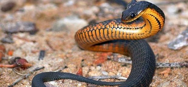 rüyada siyah yılan görme anlamı