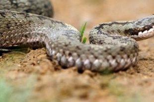 rüyada yılan anlamı nedir
